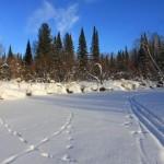 1-8-Прогулки по лесу
