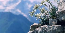 Йога-тур к Аккемскому озеру «Тропой эдельвейсов к подножью Белухи»