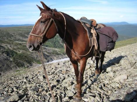 Конные туры в Сибири
